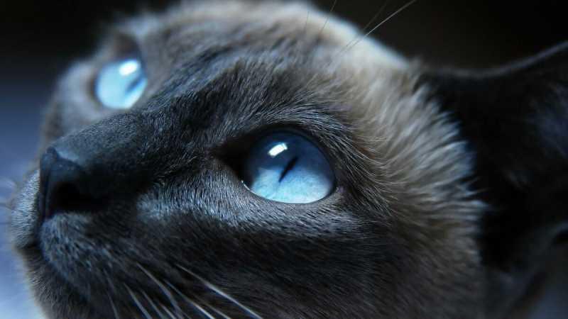 25 оттенков серого или какие цвета видят кошки?