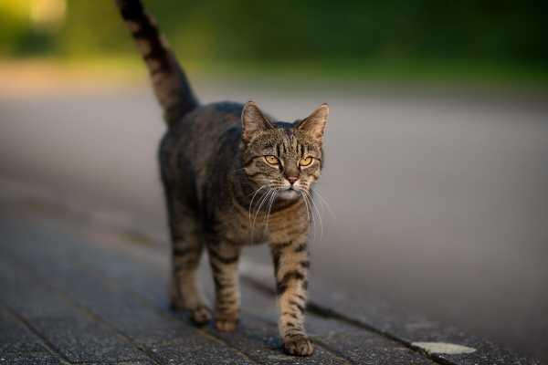 Долгий путь домой: хозяева потеряли кота в другой стране и уехали - спустя 5 недель он сидел у их дома