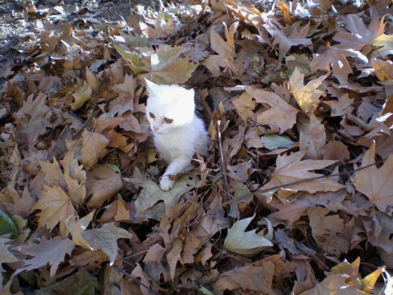 Как приучить кошку к туалету: 3 метода от Котостаи