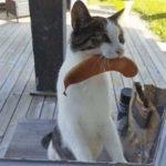 Смешные коты, которые поднимают настроение # 125