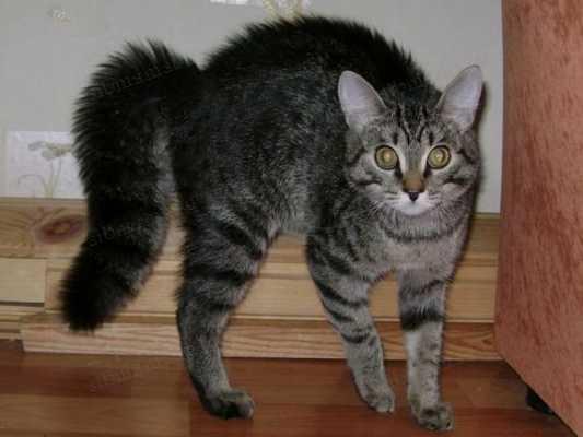Учимся понимать эмоции кошки по движению хвоста. Как в этом разобраться и понять, что хочет питомец?