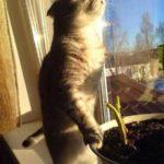 Смешные коты, которые поднимают настроение # 119