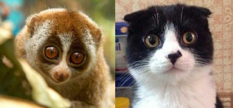 Котоприколы - 7: Дэмми - мишка, Микки - обезьянка. А на кого похожи ваши кошки?