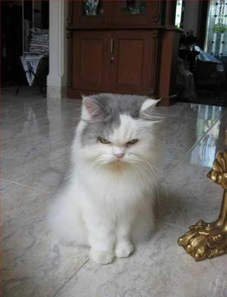 Смешные коты, которые поднимают настроение #131