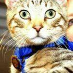 Отомстил за всех зверей - кот-полицейский против ветеринара-живодера