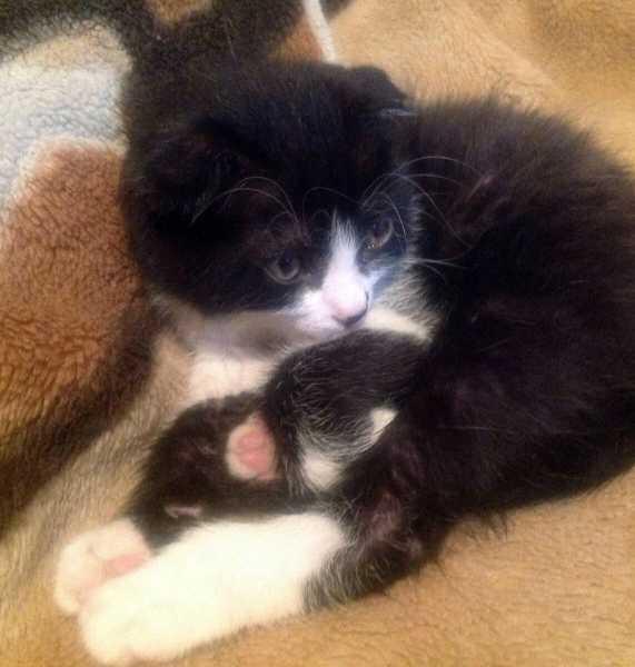 Как спят наши кошки: место, выбранное кошкой, расскажет о её отношении к хозяину