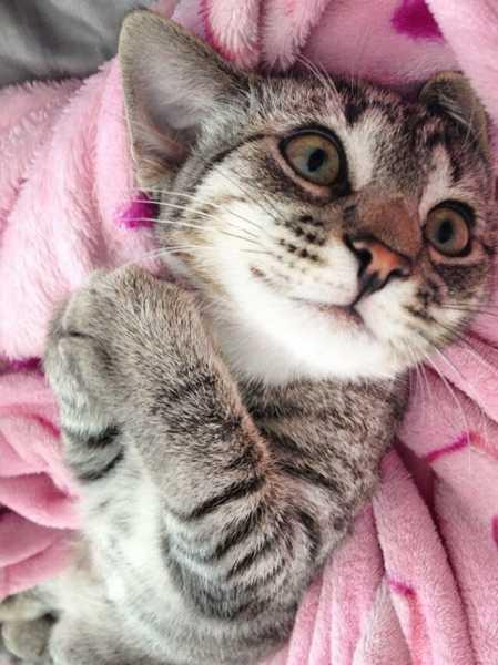 Смешные коты, которые поднимают настроение #129