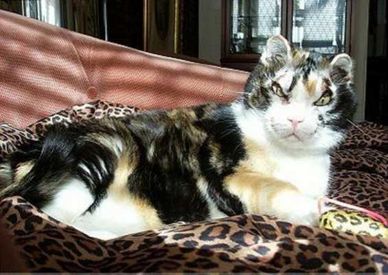 Кошка пять раз возращалась в горящий гараж и каждый раз выносила по одному котенку
