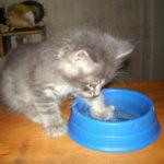 Характер кошки зависит от её знака Зодиака. А кто ваш котик по гороскопу?