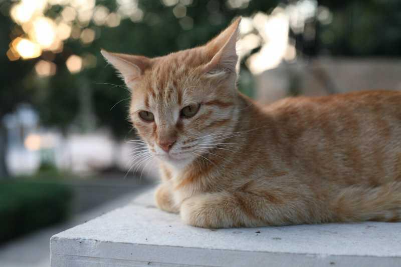 Названы страны, в которых живет больше всего кошек, Россия на 3 месте