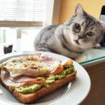 Смешные коты, которые поднимают настроение # 122