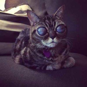 С каждым днем глаза этой кошки становились чернее и увеличились до невероятных размеров
