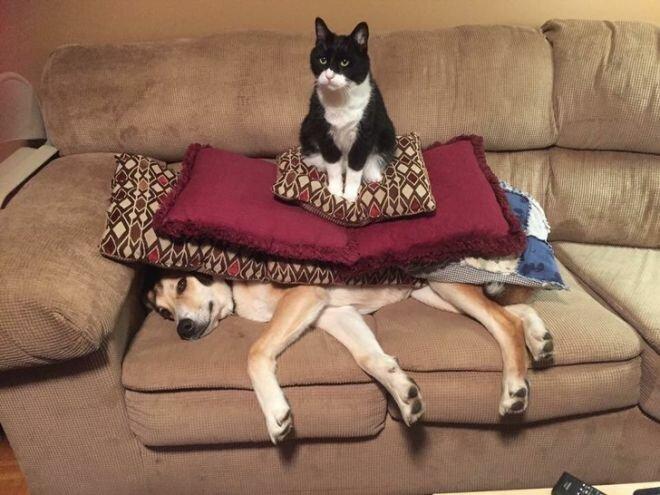 Смешные коты, которые поднимают настроение # 113