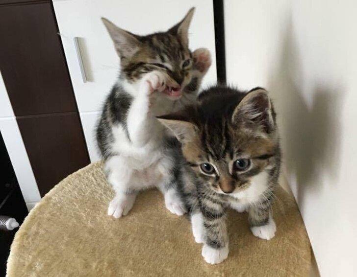 Смешные коты, которые поднимают настроение #128