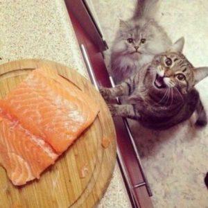 Смешные коты, которые поднимают настроение # 124