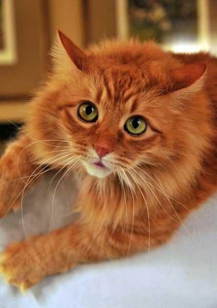 Смешные коты, которые поднимают настроение # 117