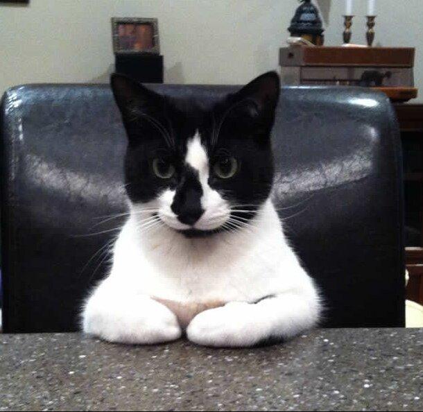 Смешные коты, которые поднимают настроение # 115