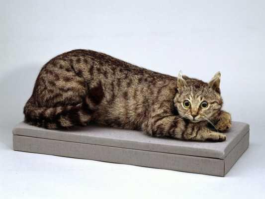Как кот по кличке Крымский Том спас солдат от голодной смерти