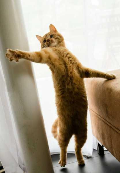 Смешные коты, которые поднимают настроение # 121