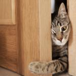 Почему кошки ненавидят закрытые двери?