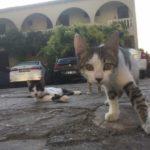 Смешные коты, которые поднимают настроение # 116