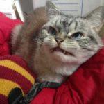 Котенка посчитали уродцем и отдали в приют, но однажды он принес любовь и богатсво новой хозяйке
