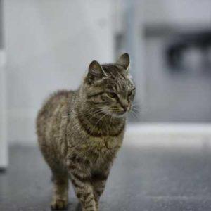 Кошка тайком пробралась в рыбный магазин и за считанные минуты стала одной из самых популярных в России