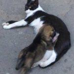 Настоящая мать - бездомная кошка Ника выкормила брошенного щенка