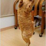 Смешные коты, которые поднимают настроение # 118