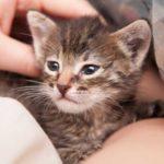 Хорошенько подумайте прежде, чем заводить кошку или почему нельзя выбрасывать животных?