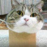 Почему кошки любят коробки? 7 основных причин