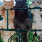 Смешные коты, которые поднимают настроение #140