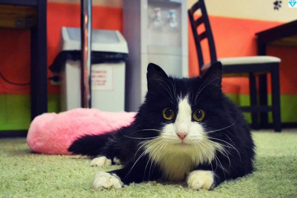 Ей не давали шансов - что случилось с бездомной кошкой, под сердцем которой была найдена пуля