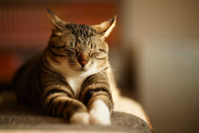 О чём расскажет спящий кот?
