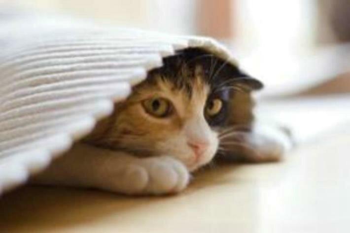 Как самоизоляция хозяина влияет на кошку?