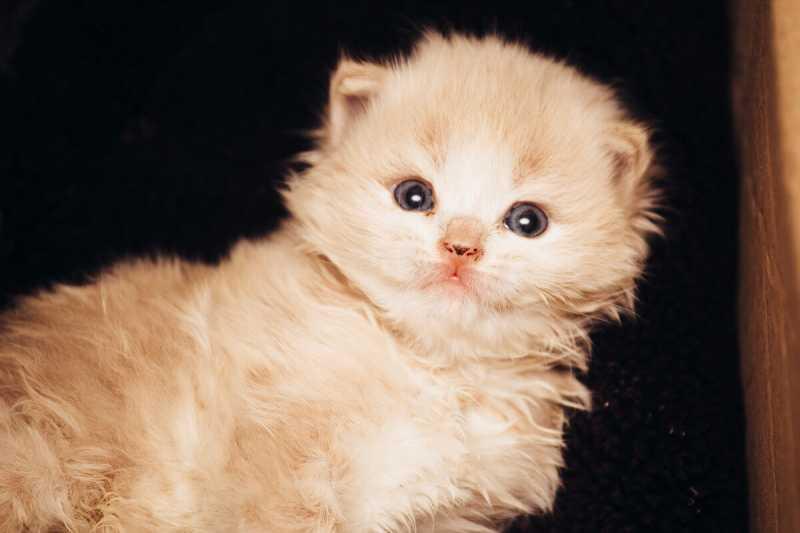 Чудеса случаются или возможна ли реинкарнация кошек...