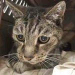 Мужчина потерял своего 12-летнего кота. Их встреча спустя 7 лет никого не оставила равнодушным!