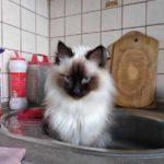 Смешные коты, которые поднимают настроение #143