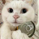 Смешные коты, которые поднимают настроение #142