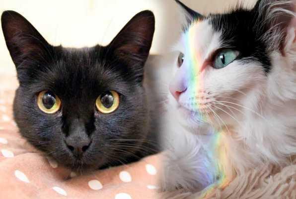 Девушка спасла двух кошек, которым ветеринары не давали шансов на жизь - счастливая история Коровушки и Булочки