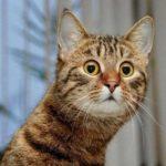 Смешные коты, которые поднимают настроение #145