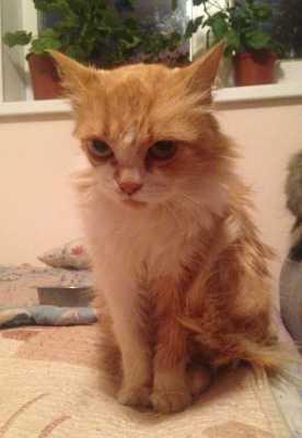 Как забота и любовь сделали из несчастной больной бездомной кошки настоящую красавицу и помогли найти дом
