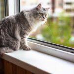 Какие опасности подстерегают кошку дома? Мнение ветеринаров