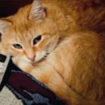 Невероятная история спасения - кот позвонил в 911, когда его хозяину стало плохо