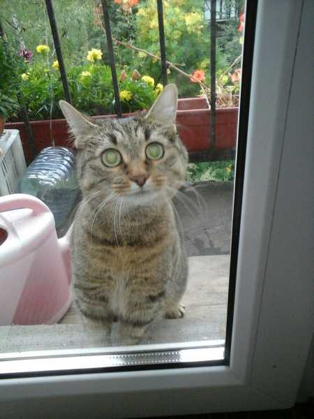 Смешные коты, которые поднимают настроение #132