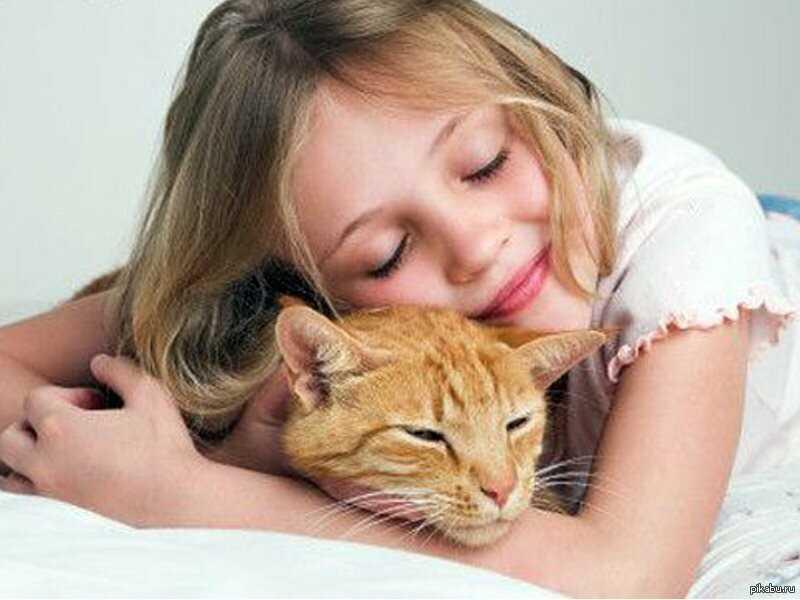 Самые верные кошки: 8 пород, не уступающих собакам