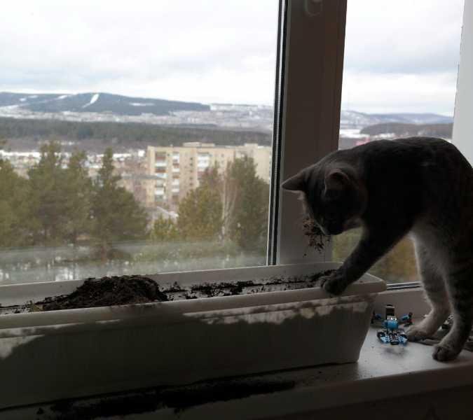 Котоприколы - 8: Котики-огородники. Как наши кошки помогают сажать рассаду и комнатные цветы