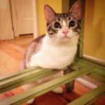 Кот-кенгуру - история жизни котика, потерявшего лапки и хвост, но нашедшего дом и лбюбовь