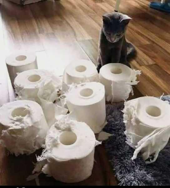 Смешные коты, которые поднимают настроение #135