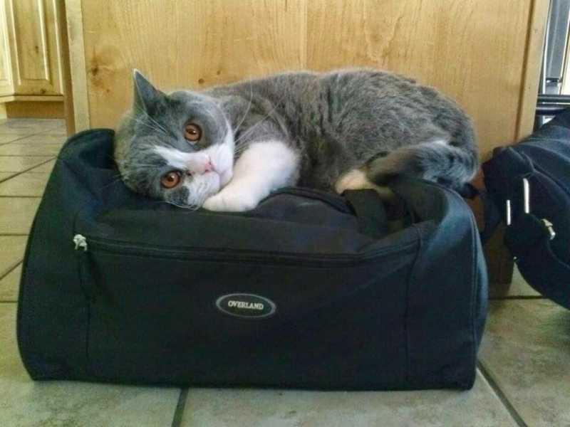 Смешные коты, которые поднимают настроение #133